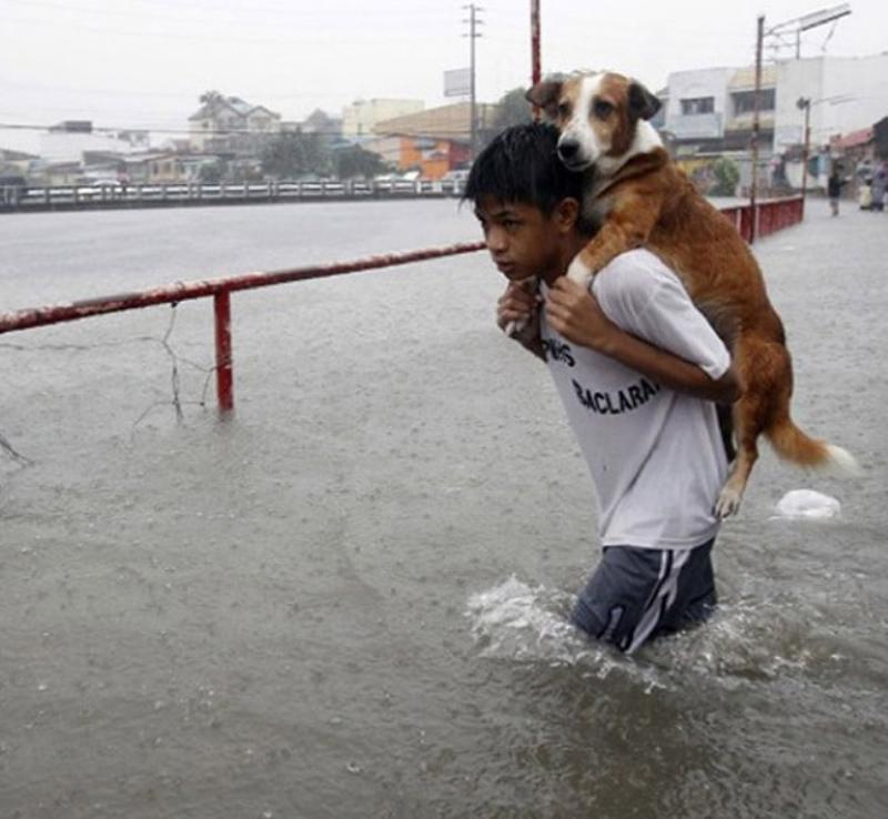 Saving-A-Dog-From-a-flood-57240-21380