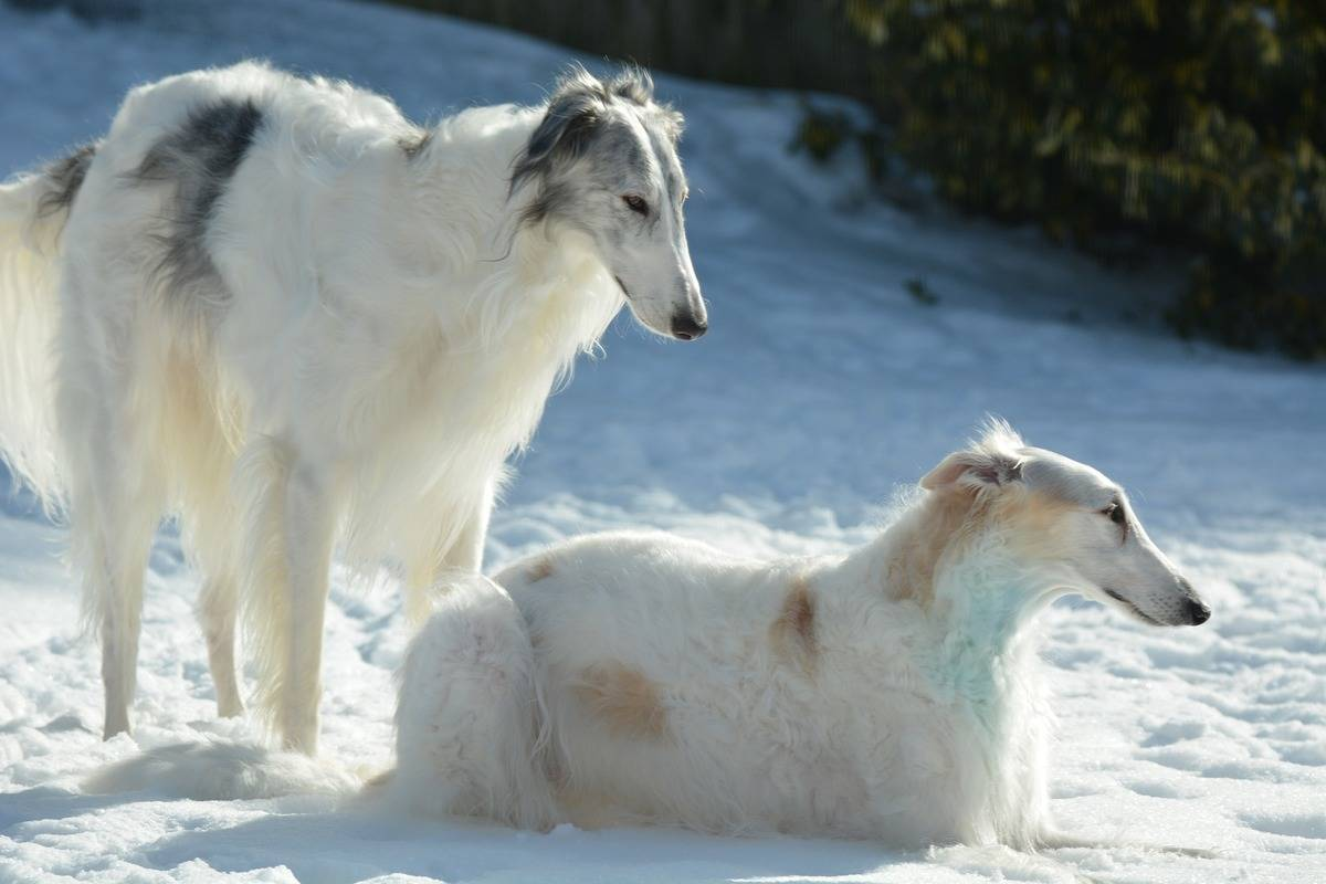 dogs-4033282_1920