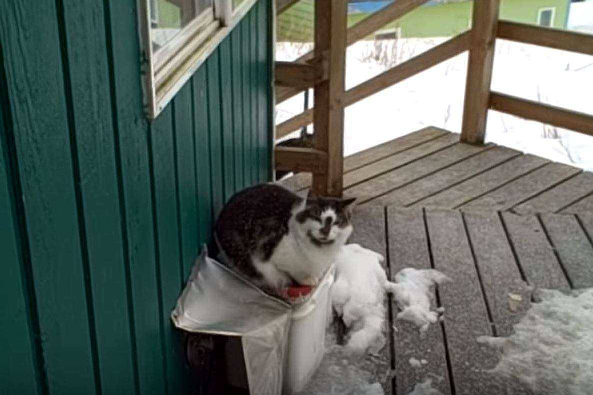 Gizmo the cat sits on Pam's porch.
