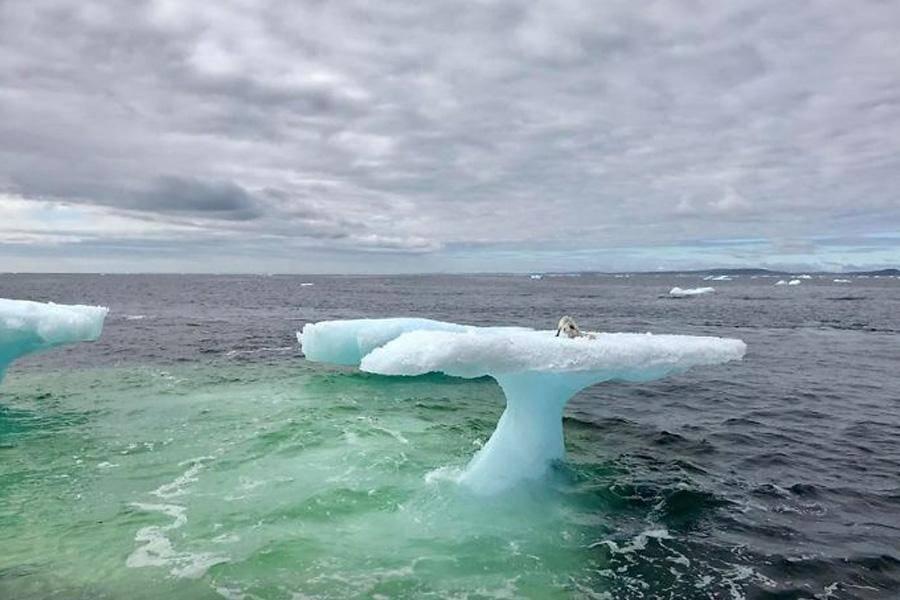 Iceberg, Straight Ahead!