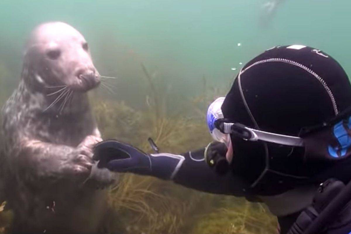 diver-seal-ad-74991