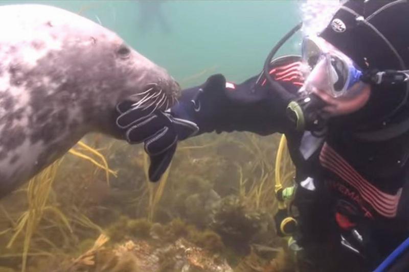 scuba-seal-encounter-16-85824