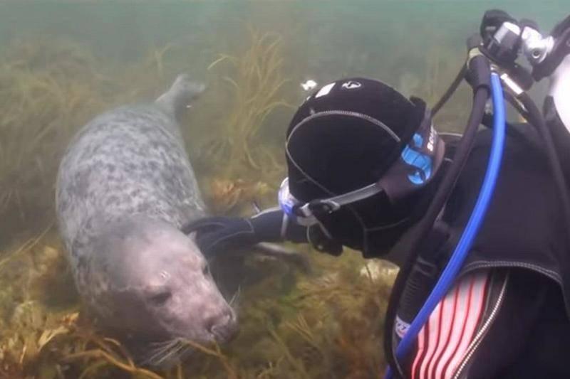 scuba-seal-encounter-21-22102-19178