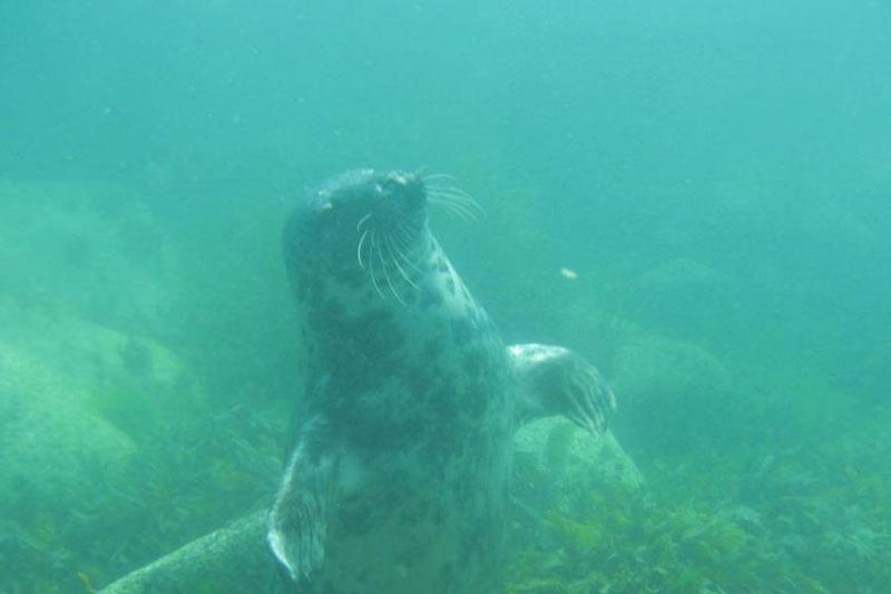 scuba-seal-encounter-4-14646-54883
