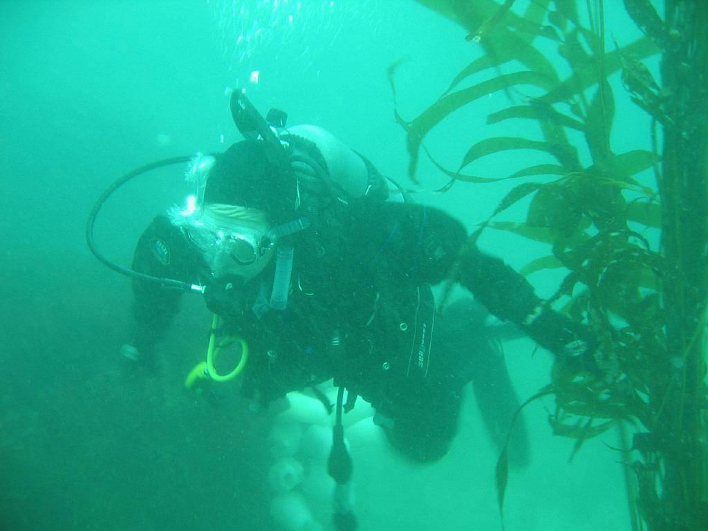 scuba-seal-encounter-6-36747