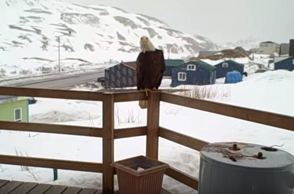An eagle sits on a porch rail.