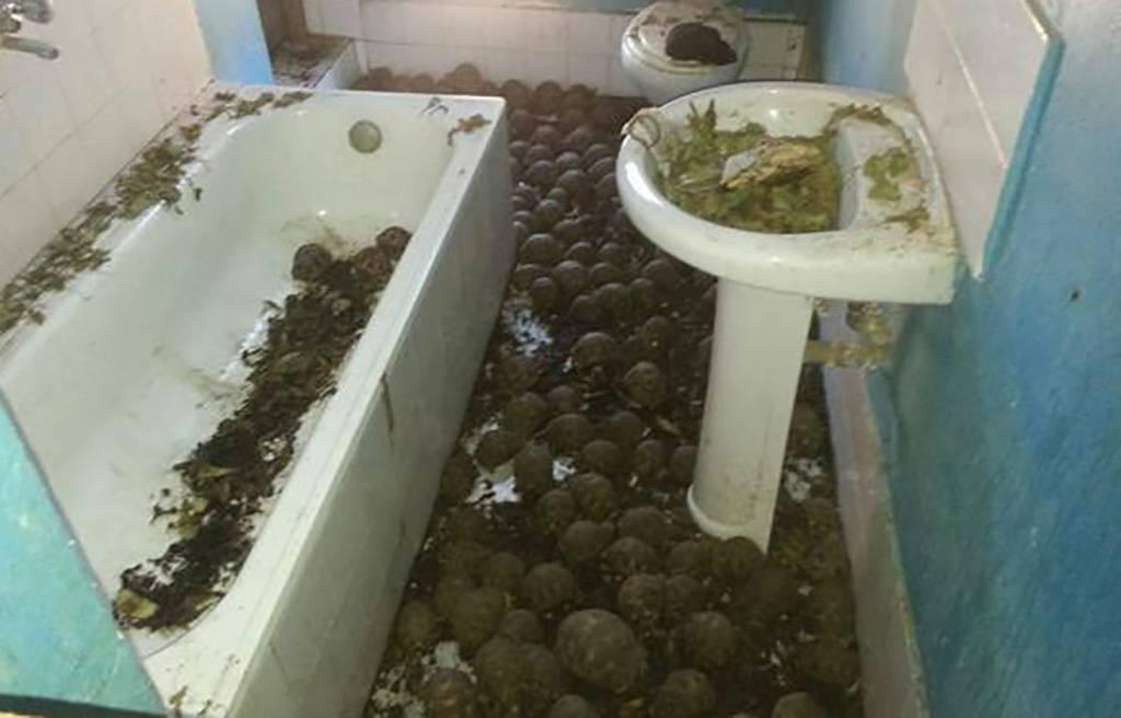 tortoises-in-the-bathroom-58578