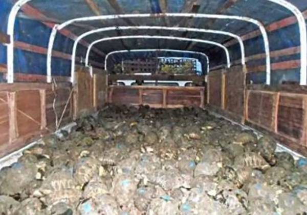 truck-of-tortoises