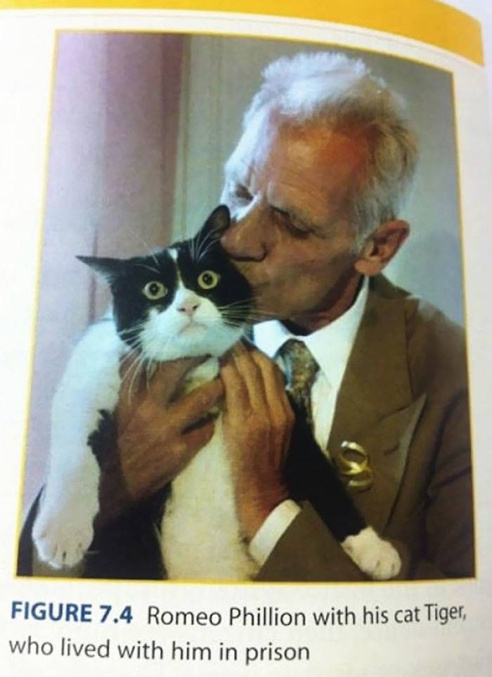 Romeo Phillion's cat, who lived with him in prison, has wide, terrified eyes.