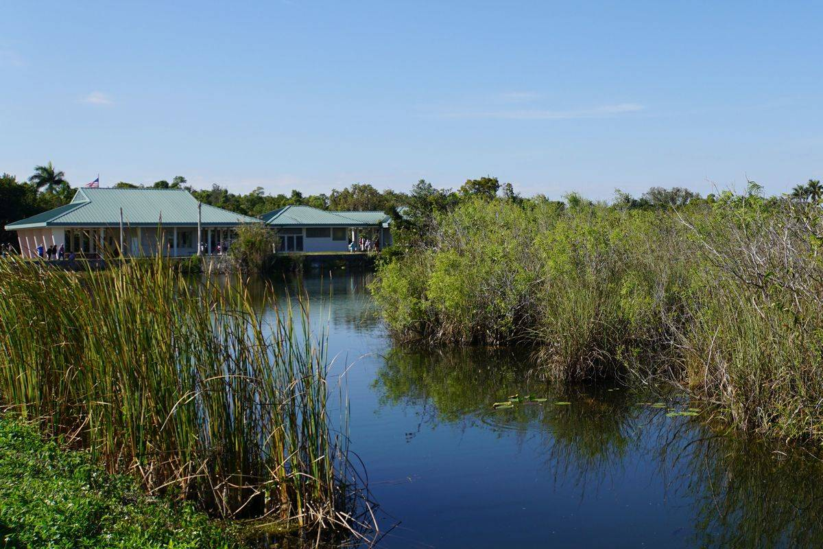 A house is seen in the Florida everglades.