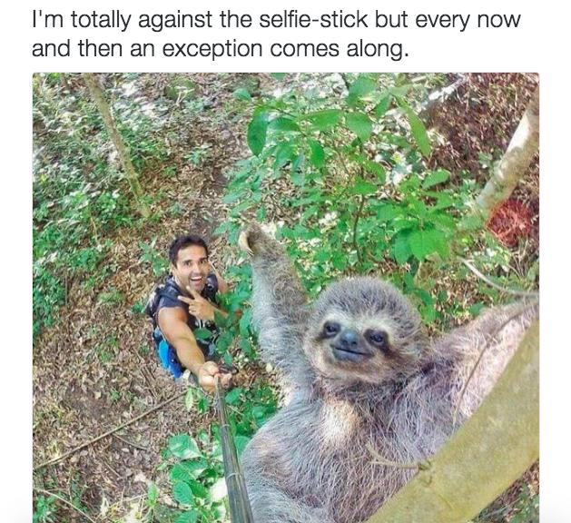 The Cute Sloth Selfie