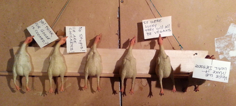 Chicken Reminders