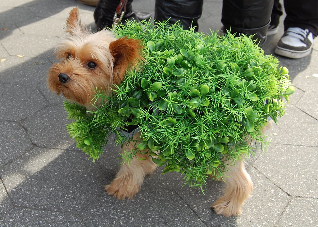 The funniest halloween costumes for pets this year solutioingenieria Choice Image