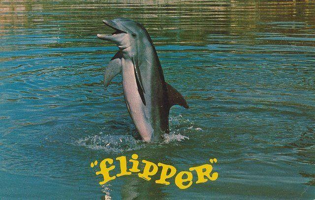flipper gratis