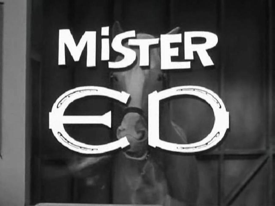 Mister Ed 16