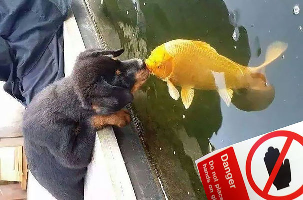 Aquarium kiss.jpg