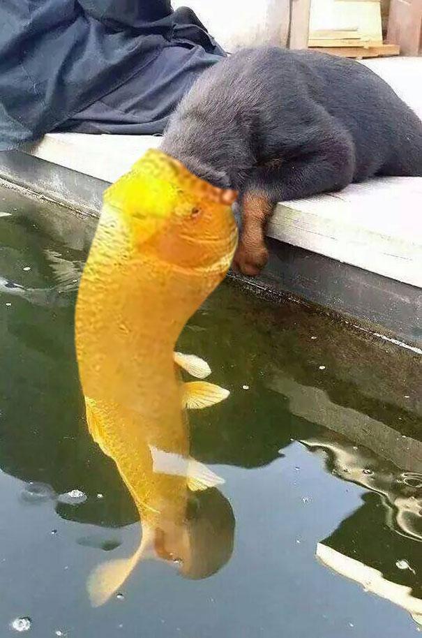 Fish eating dog.jpg