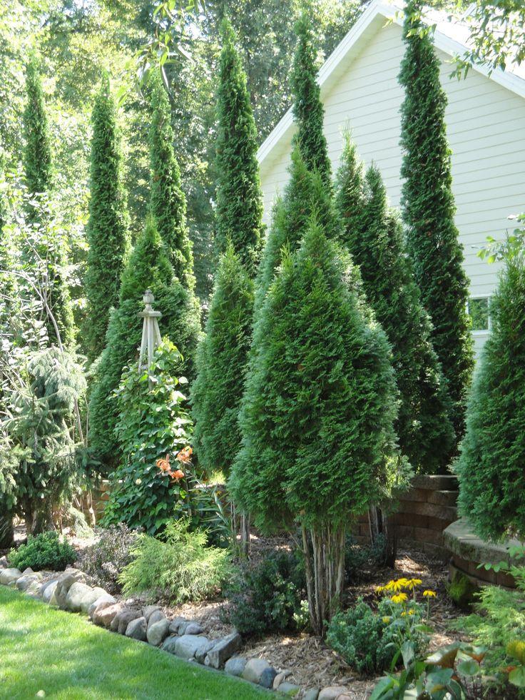 Plant a Tree Fence
