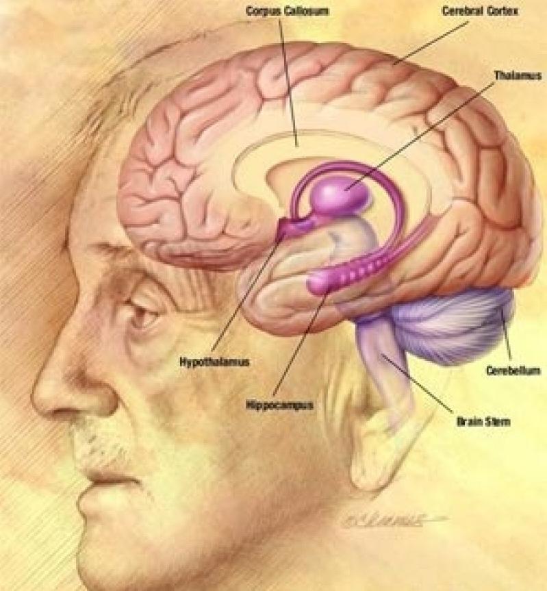 Brain & Gut