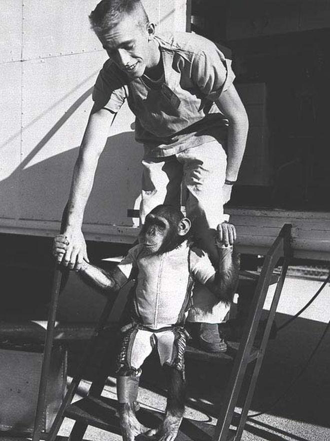 monkey astronaut movie - photo #46