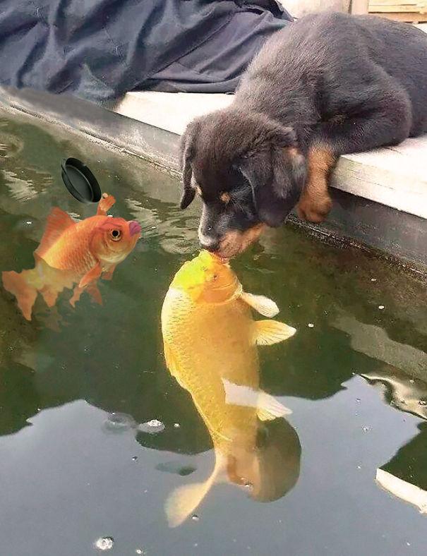 The Jealous Fish