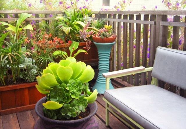 Succulents on a Deck
