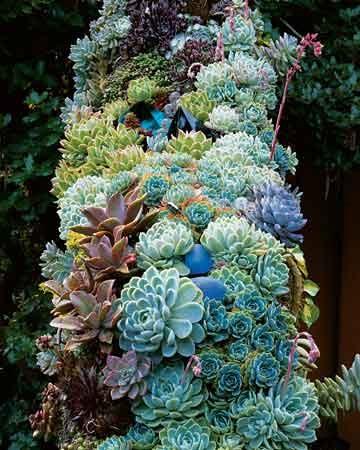Succulent Arch