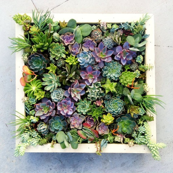 Frame the Succulents