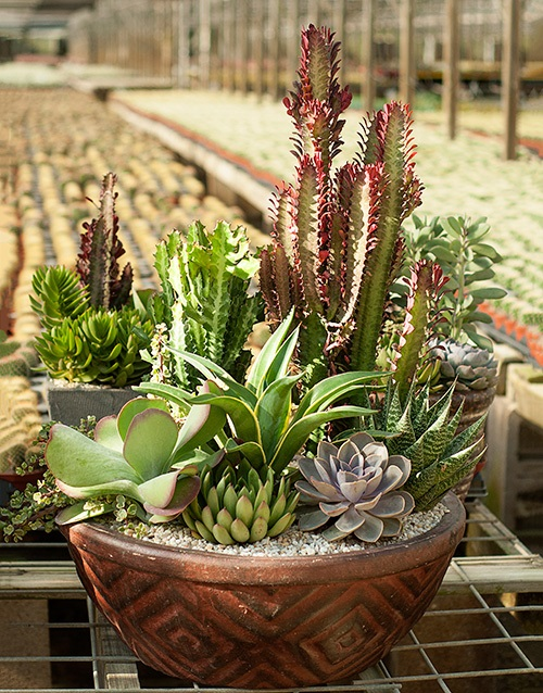 Awesome Ideas for Decorating with Succulents trendchaser