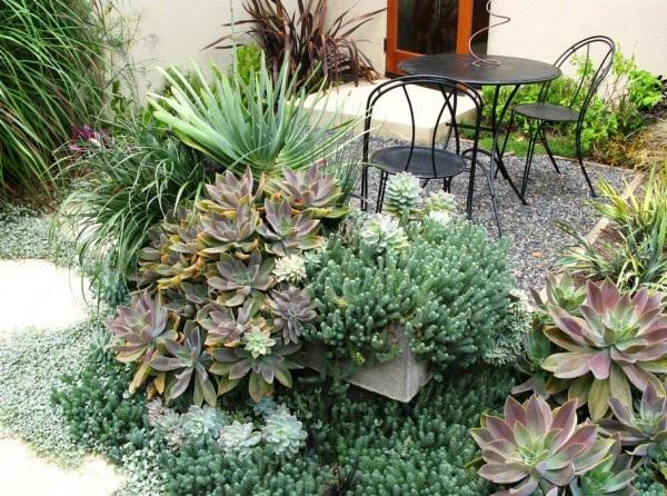 Abundance of Succulents