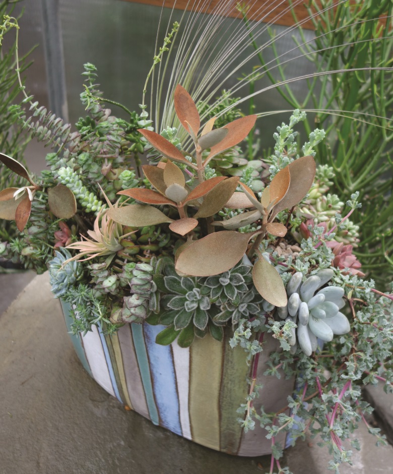 Layer Your Succulents