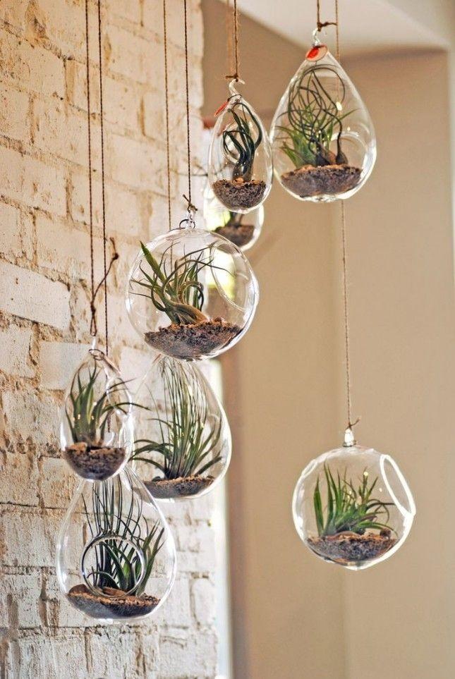 Hang Your Succulents