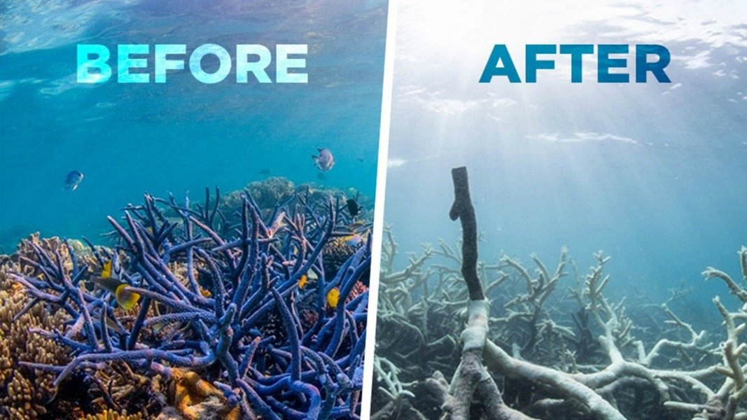 The Great Barrier Reef: Thousands of Miles Dead