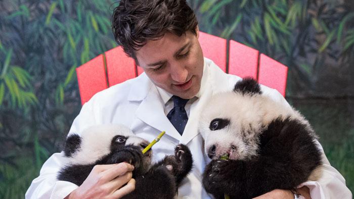 Justin Trudeau's Pandas.jpg