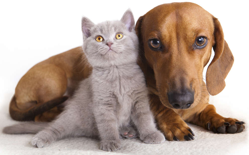 All a Pet Needs Is…?