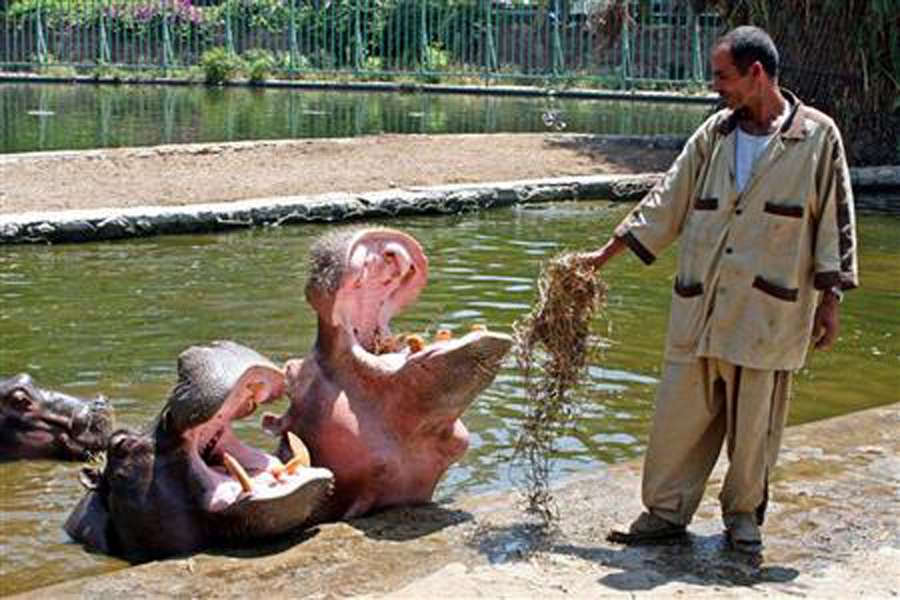 Egypt's Giza Zoological Garden