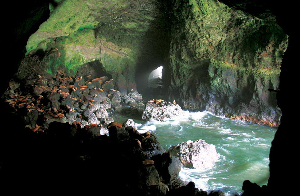 Oregon's Sea Lion Caves