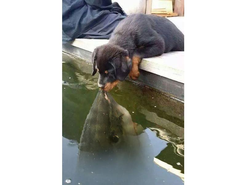 The Shark wants a Kiss
