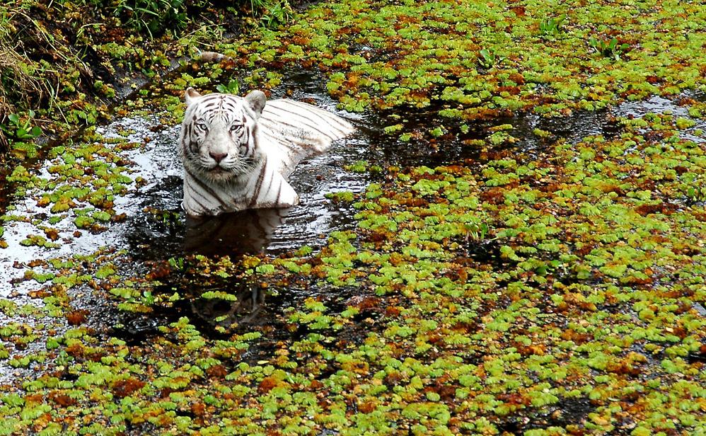 Pana'ewa Rainforest Zoo Gardens