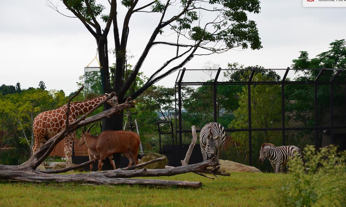 Japan's Yokohama Zoological Gardens (Zoorasia)