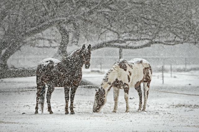 001-horse-419743_640-1489768762135.jpg