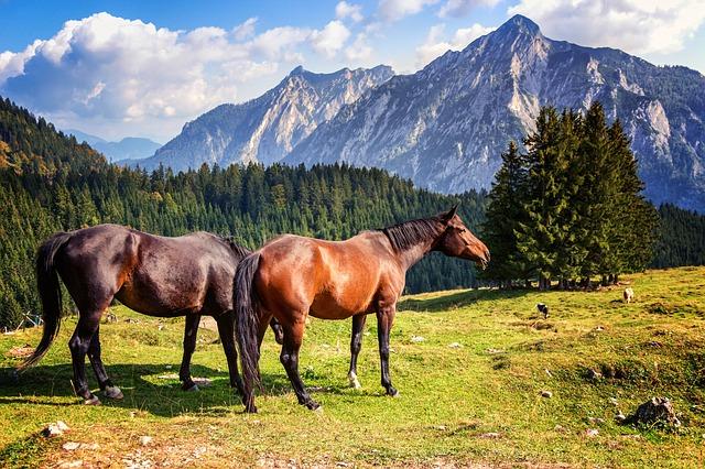 002-horse-2090986_640-1489798847157.jpg