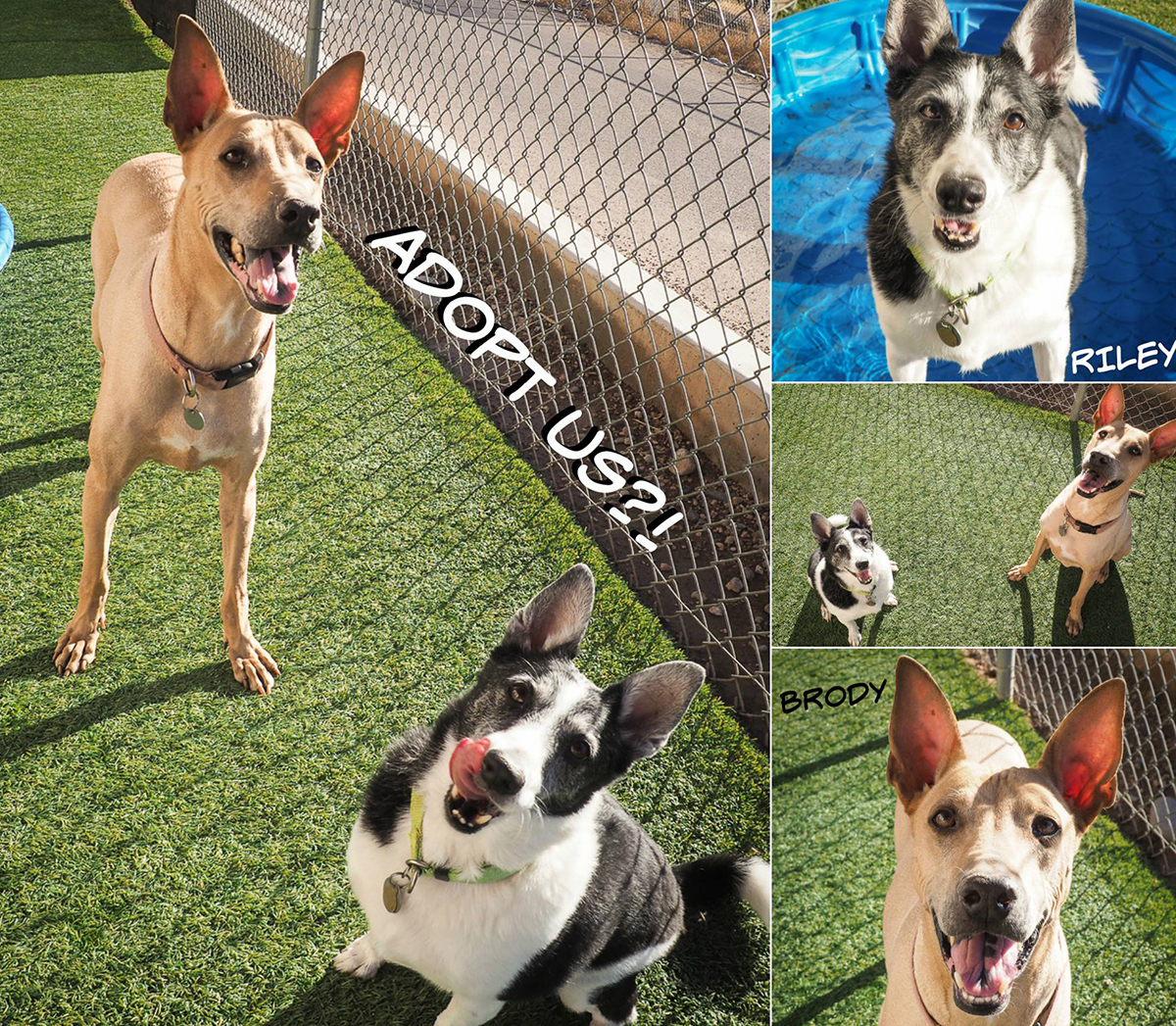 Maricopa-County-Animal-Care-and-Control.jpg