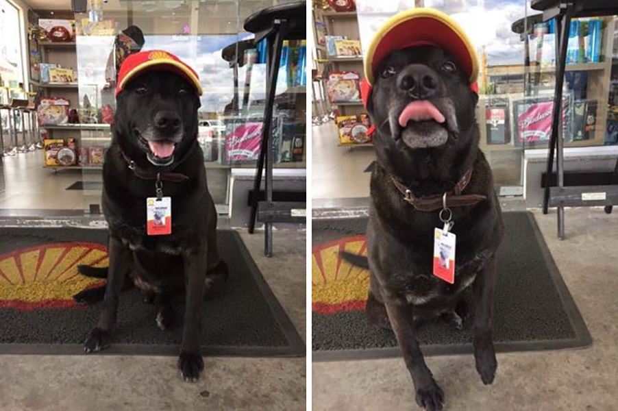 abandoned-dog-gas-station-employee-negao-brazil-1.jpg