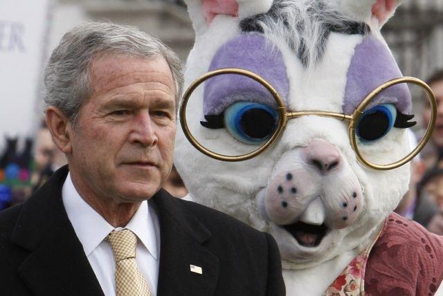 Political Bunny