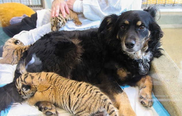 dog and cub