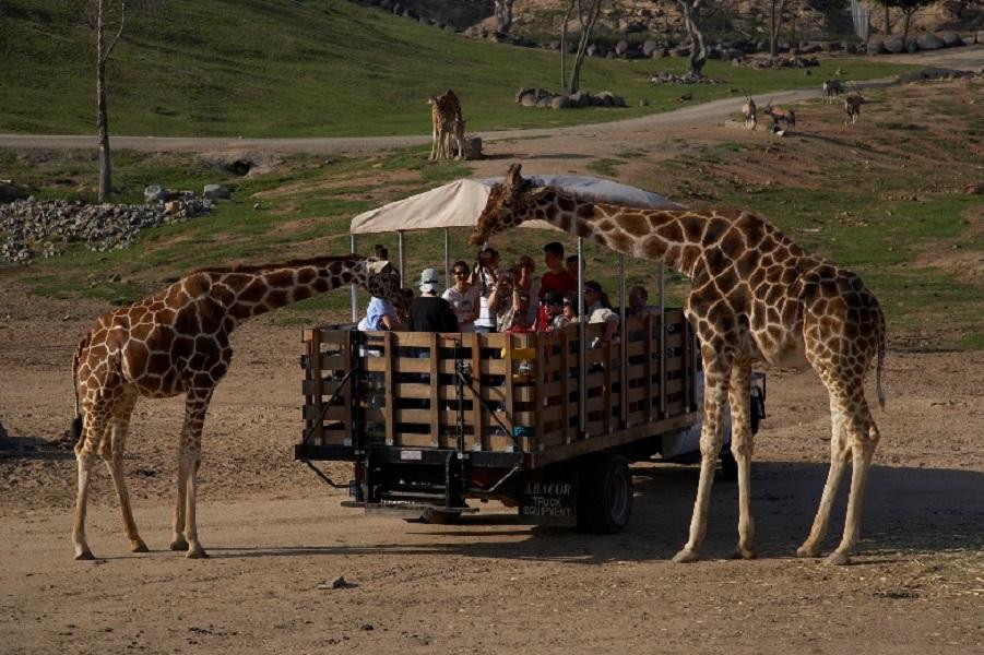 San-Diego_SafariPark