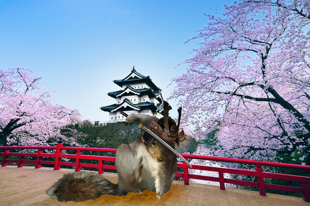 Samurai Squirrel
