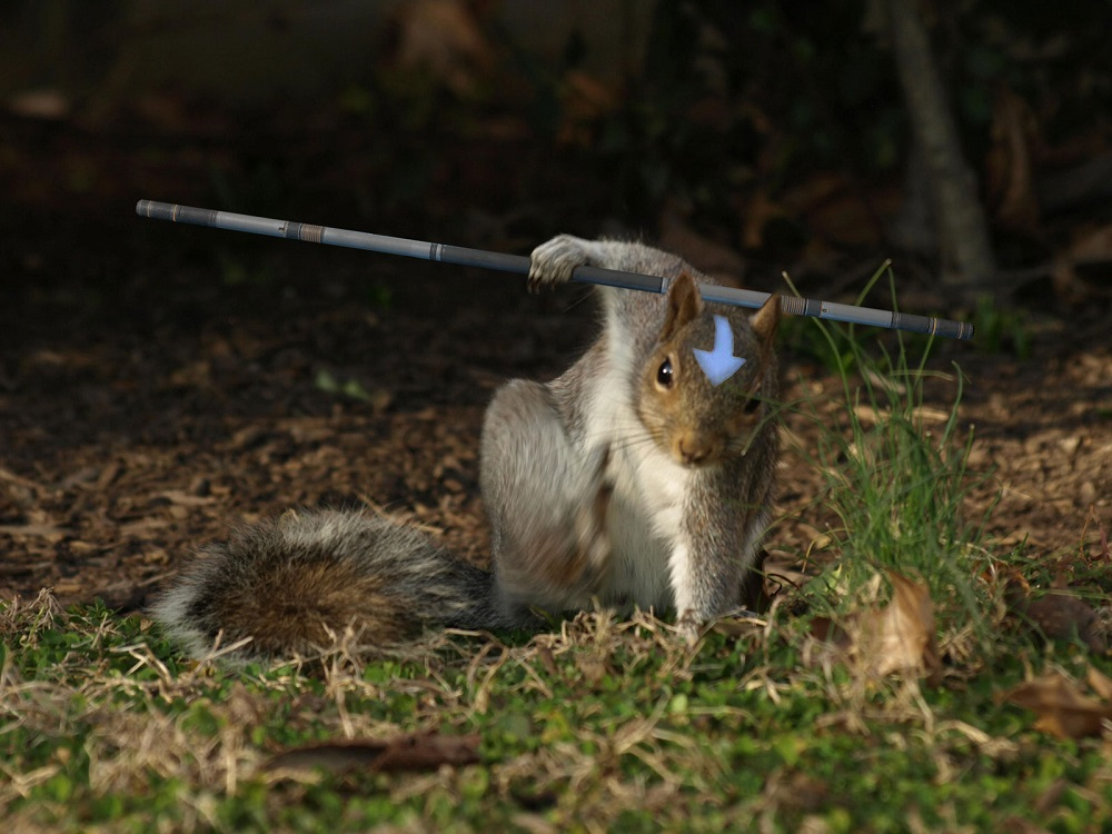 Squirrel: The Last Furbender
