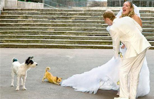 This Wedding Has Gone To The Dogs